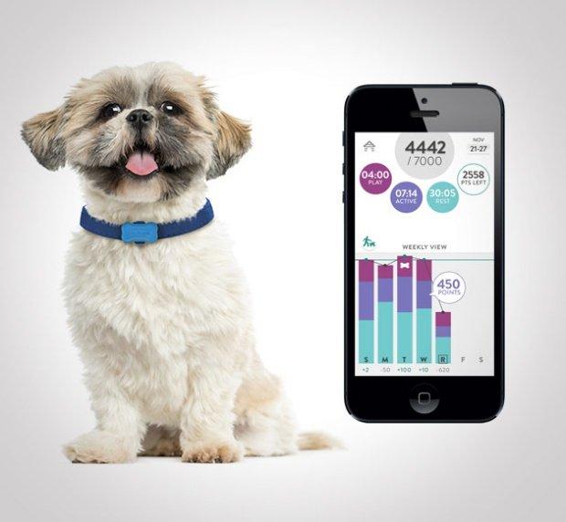 Perro con un smartwatch para perros Fitbark y con la aplicación del móvil al lado