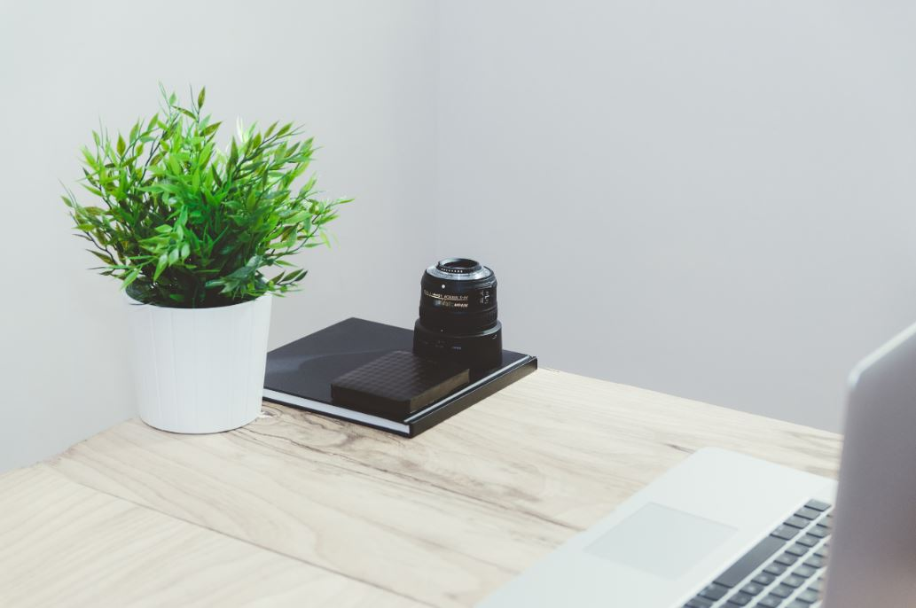 Maceta con una planta sobre un escritorio
