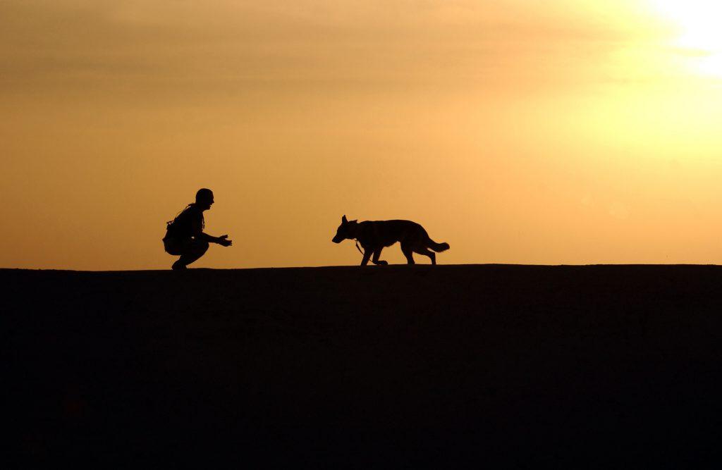 Silueta de un perro yendo hacia su perro