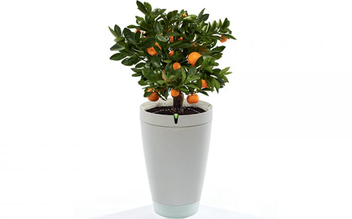 Maceta parrot POT, para regar tus plantas en vacaciones