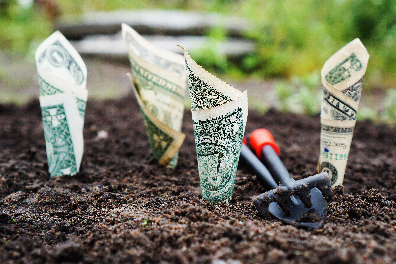 Billetes medio enterrados en la tierra