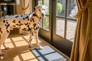 Barking Mat 4 cosas que necesitas en tu smart home foto