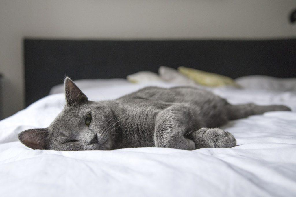 gato perezoso en cama inteligente ohea