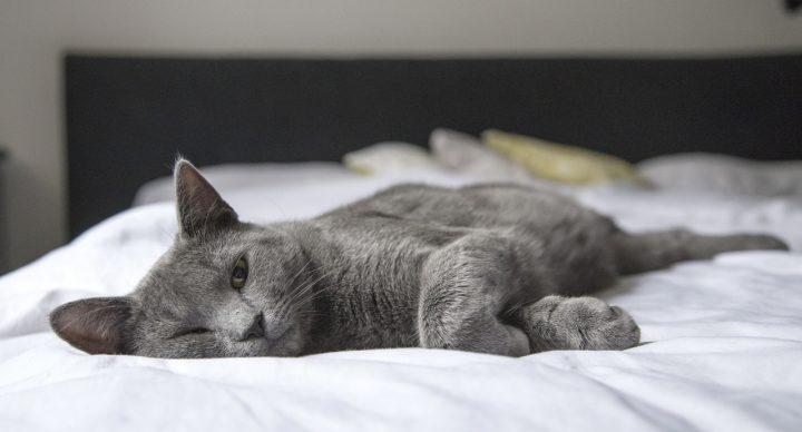 La cama inteligente Ohea te facilita la vida